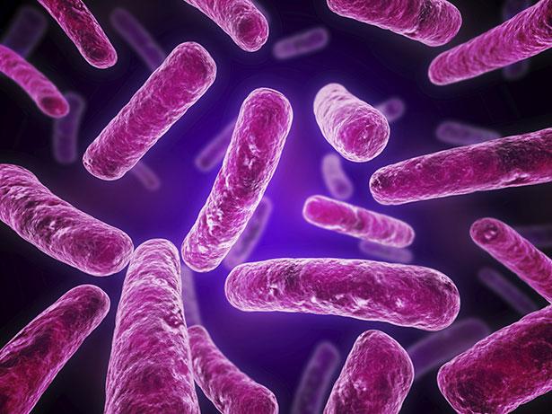 Darmkeime wie Escherichia coli prägen unsere Gesundheit – und sie kommunizieren miteinander.