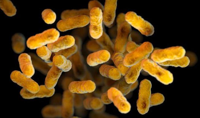 Bakterien sind Überlebenskünstler und kommen selbst mit wechselnden Bedingungen klar. © CDC/ Sarah Bailey Cutchin