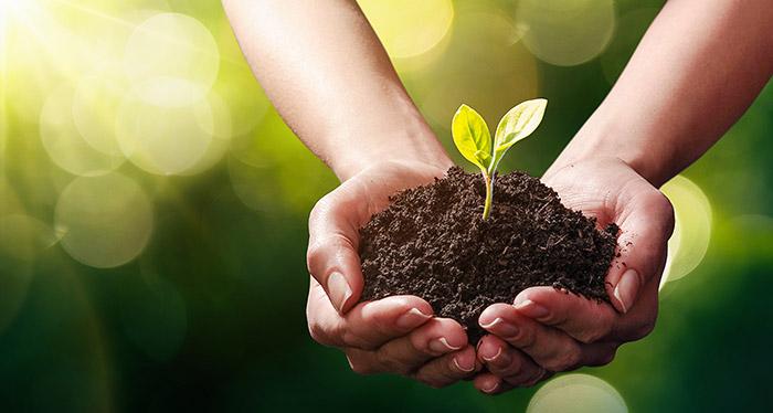 Ein Dilemma: unsere Nutzpflanzen benötigen Nährstoffe, aber die Düngung erzeugt viele Umweltprobleme. © Baks/ iStock