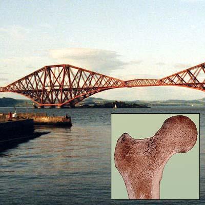 Vorbild Knochen: Brücken