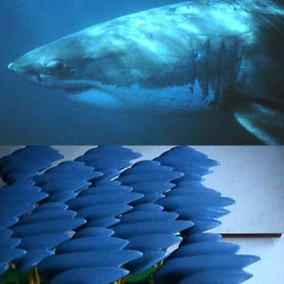 Haihaut-Struktur verbessert Strömung