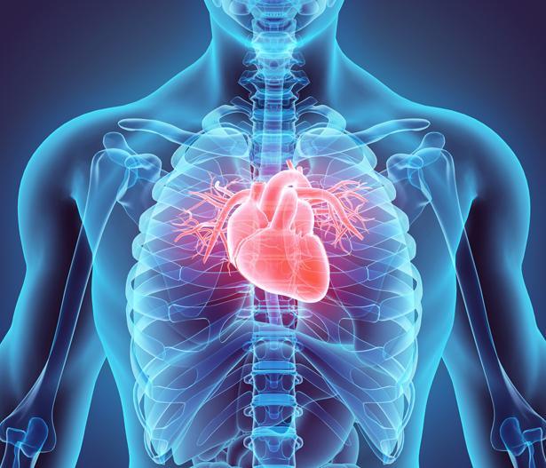 Pro Tag schlägt das Herz rund 100.000 Mal und pumpt dabei circa 7.000 Liter Blut durch die Gefäße in unseren Körper.