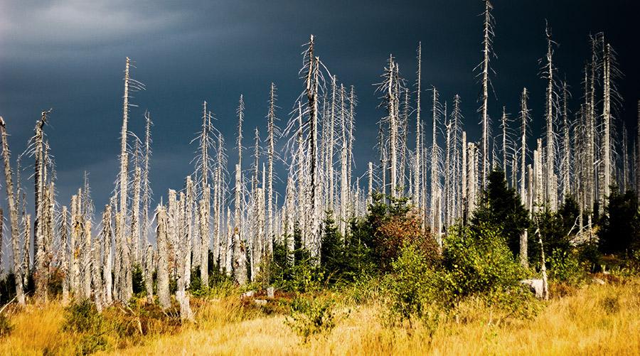 Dürre, Hitze, Feuer und Schädlinge: Der deutsche Wald steht unter Stress. © David Schwimbeck/ iStock