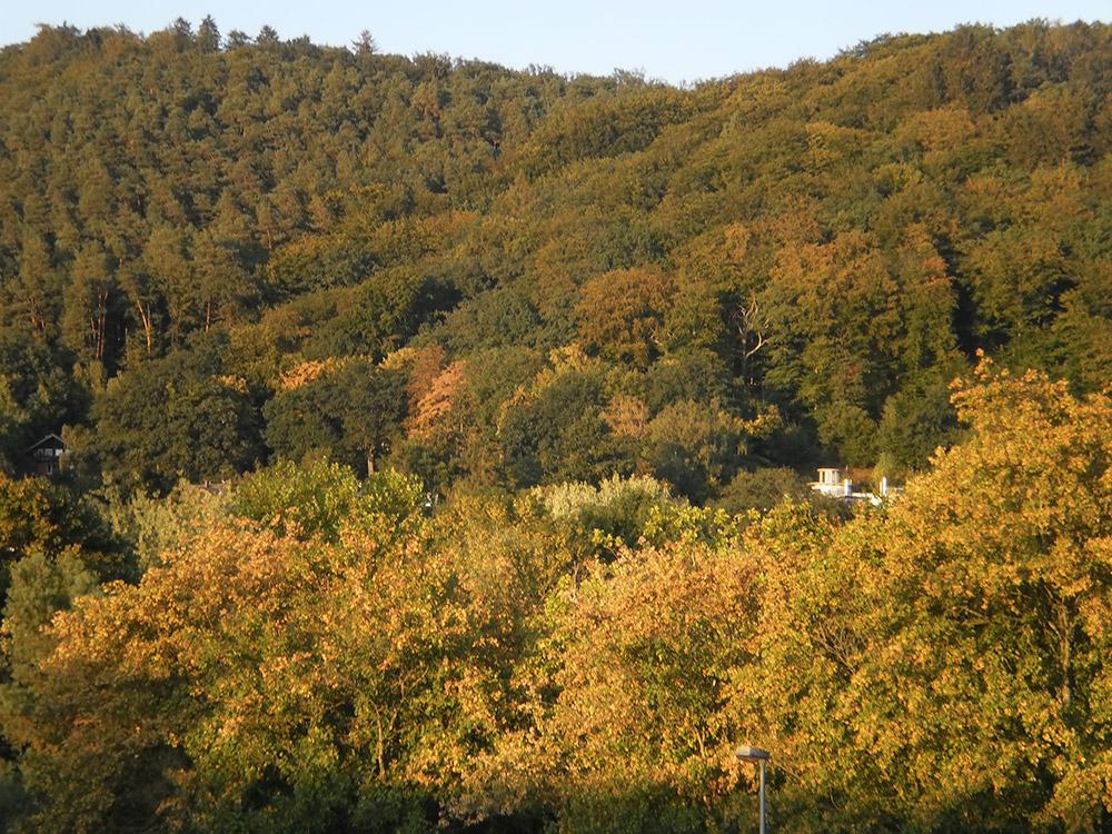 "<span class=""img-caption"">Wald mit vorzeitig vertrockneten und vergilbten Bäumen Anfang September 2018 bei Marburg.</span> <span class=""img-copyright"">© LudwigSebastianMicheler/<a href=""http://creativecommons.org/licenses/by/4.0"" target=""_blank"">CC-by-sa 4.0</a></span>"