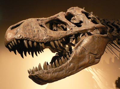 Kreide-Tertiär-Grenze: Das Ende der Dinosaurier
