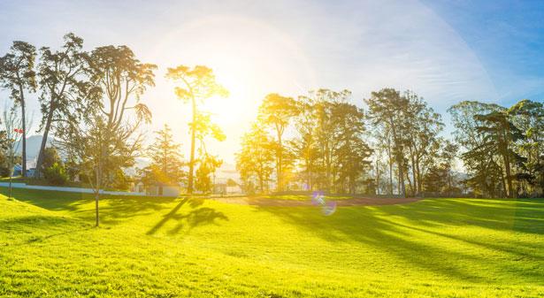 Licht zu Zucker und Sauerstoff umwandeln: Darin sind Pflanzen mit ihrer Fotosynthese wahre Meister.