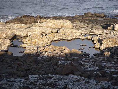 Gezeitentümpel am Meersufer: in solchen Tümpeln sieht Miller die Wiege des Lebens