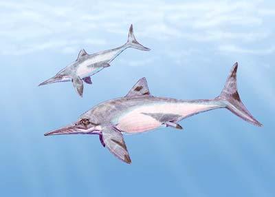 Platypterygius