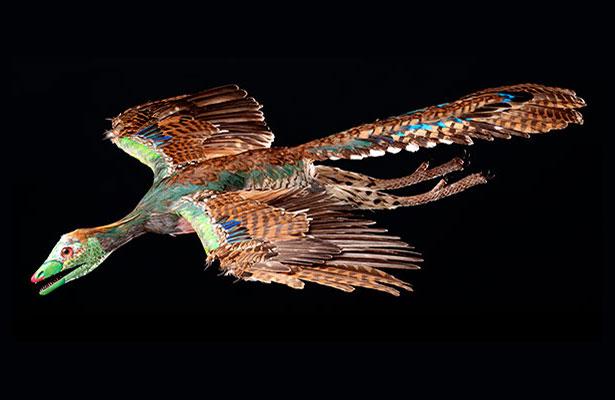 Lebendrekonstruktion des Urvogel Archaeopteryx im Flug
