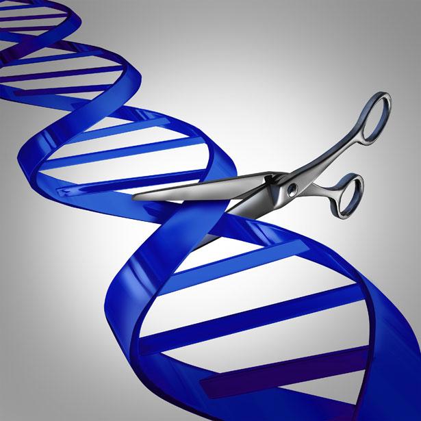Die Genschere kann jede beliebige DNA-Sequenz präzise wie ein Skalpell ausschneiden und ersetzen.