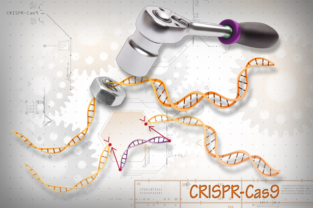 CRISPR/ Cas 9 ist das Universalwerkzeug, auf das Genetiker schon lange gewartet haben - aber wer ist sein wahrer Erfinder?