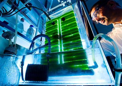 Aus Algen lassen sich Chemikalien-Grundstoffe, aber auch Biodiesel und Energie gewinnen