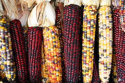 Mais: Von Natur aus gibt es ihn in allen Formen und Farben.