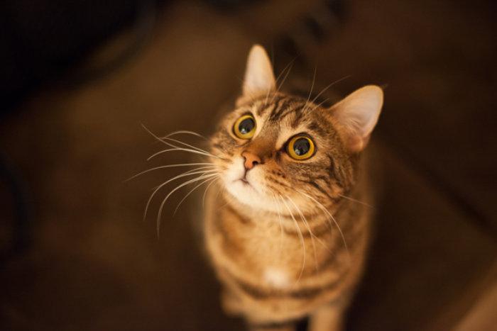 Die Katze: unser liebstes Haustier © Julija/ thinkstock
