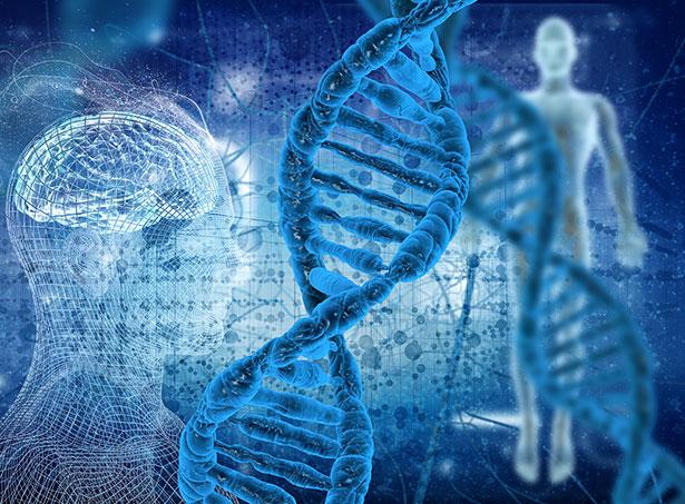 Fasten verursacht schon nach kurzer Zeit Veränderungen der Genaktivität
