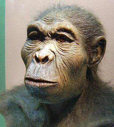 So wie in dieser Rekonstruktion könnte der Homo habilis ausgesehen haben.