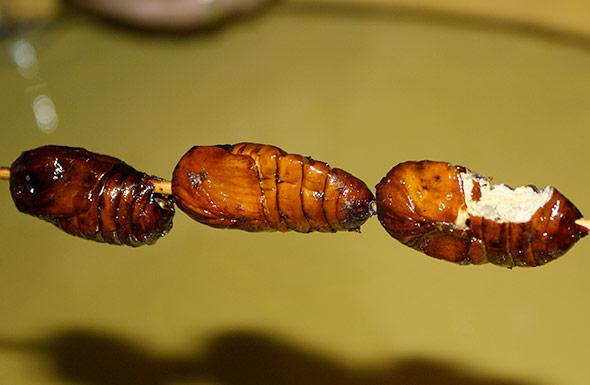 Gerade Larven und Puppen enthalten oft besonders viel Proteine - hier geröstete Spinner-Puppen in China.