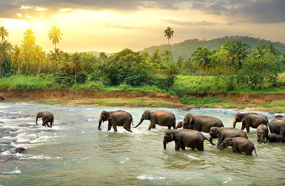 Inseln haben eine ganz besondere Tier- und Pflanzenwelt – woran liegt das? © Givaga/ iStock