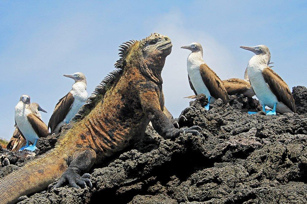 """Wenn Tiere auf Inseln gigantisch groß werden, können sie zu ungewohnten Fressfeinden werden. <span class=""""img-copyright"""">© reisegraf/ iStock</span>"""