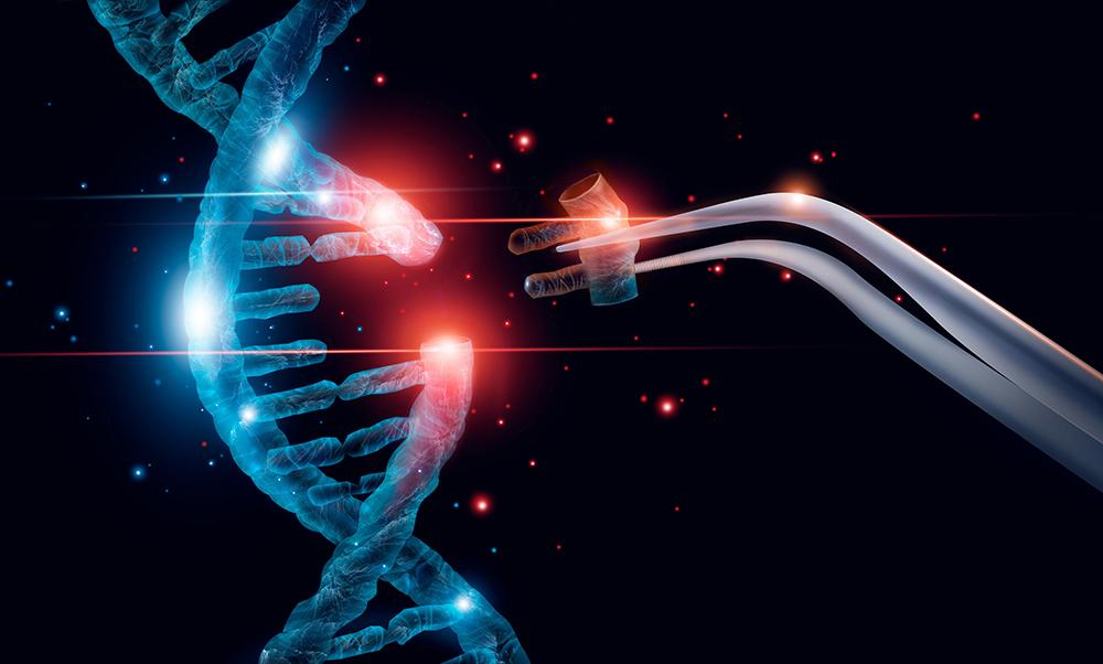 """Noch sind die Nebenwirkungen und Spätfolgen einer Geneditierung beim Embryo weitgehend unbekannt. <span class=""""img-copyright"""">© ipopba/ Getty images</span>"""