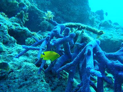 Forscher sammelten Proben dieser Korallen auf dem Great Barrier Reef in Australien, um das Rezept für deren natürlichen Sonnenschutz zu entschlüsseln.