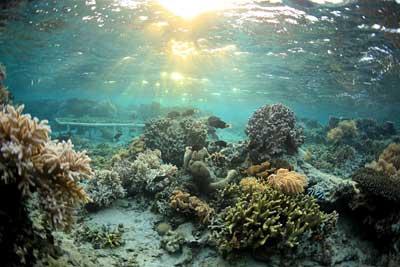 Gesunde Korallen
