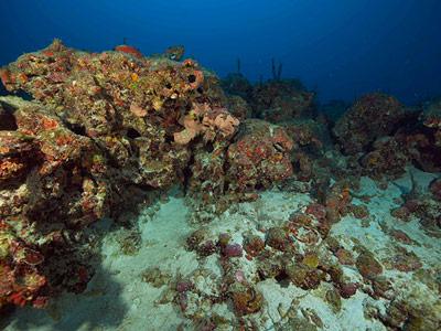 In 65 bis 70 Metern Tiefe stoßen die Taucher auf die Reste eines früheren Korallenriffs