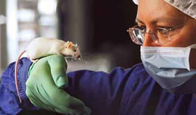 Mit der Anti-Onkomaus können die Auswirkungen von Krebsmedikamenten im Stoffwechsel simuliert werden.