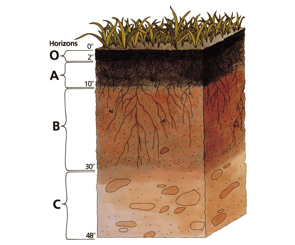 """Der Boden lässt sich in verschiedene Erdschichten, die Horizonte, einteilen. <span class=""""img-copyright""""> © United States Department of Agriculture </span>"""