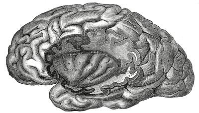 In der Hirnrinde werden die Verknüpfungen gebildet, die unser Langzeit-Gedächtnis ausmachen