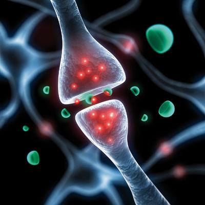 Synapse - diese Kontaktstellen spielen beim Lernen und Gedächtnis ene wichtige Rolle