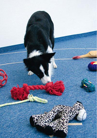 Hunde können über ein Ausschlussverfahren Bekanntes von Unbekanntem separieren und so neue Worte lernen.