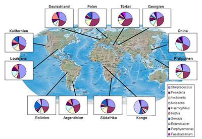 Karte der Probenentnahmeorte und relative Häufigkeit der zehn in den Speichelproben jedes Ortes häufigsten Bakteriengattungen.