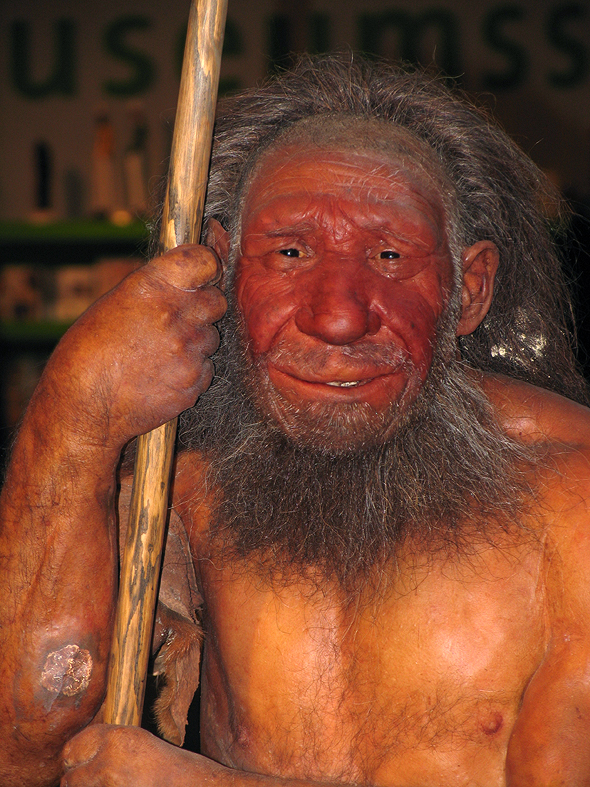 Rekonstruktion eines Neandertalers im Neanderthal-Museum Mettmann, nahe dem Fundort der ersten Neandertaler-Fossilien