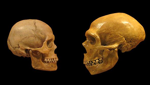 Gegenüberstellung: Moderner Mensch (links) und Neandertaler (rechts)