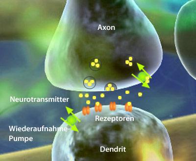 Ansatzstelle der Neuro-Enhancer: die Neutrotransmitter der Synapsen