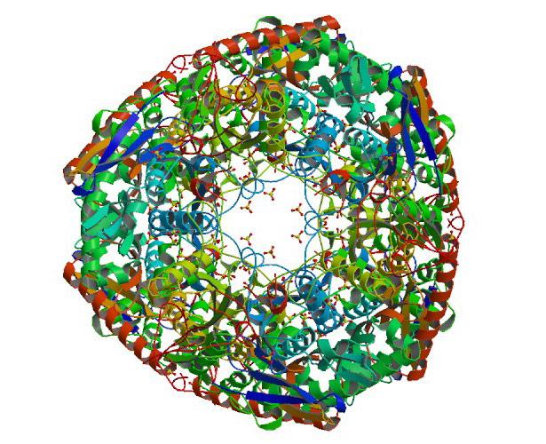 Kristallisierte Struktur des Enzyms Polynucleotid-Phosophorylase
