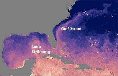 Loop-Strom und Golf-Strom transportieren das Öl bis in den Atlantik