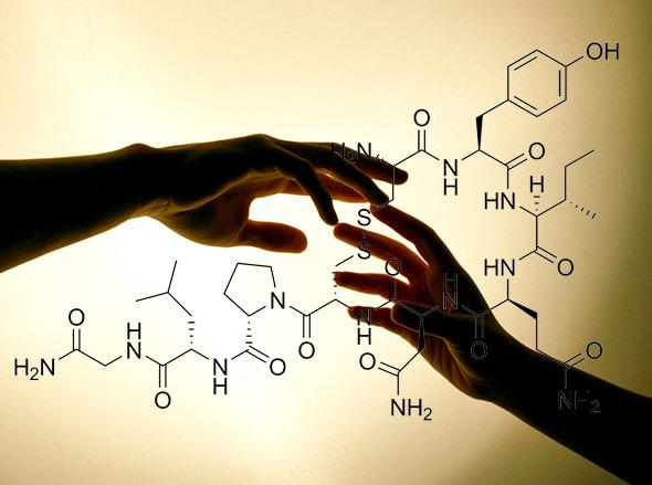 Oxytocin fördert die Empathie