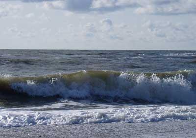 Viele Mikroben, viel organisches Material: Nordseewasser