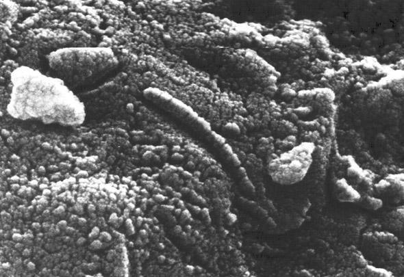 Spuren angeblicher Nanobakterien auf dem Marsmeteoriten ALH84001