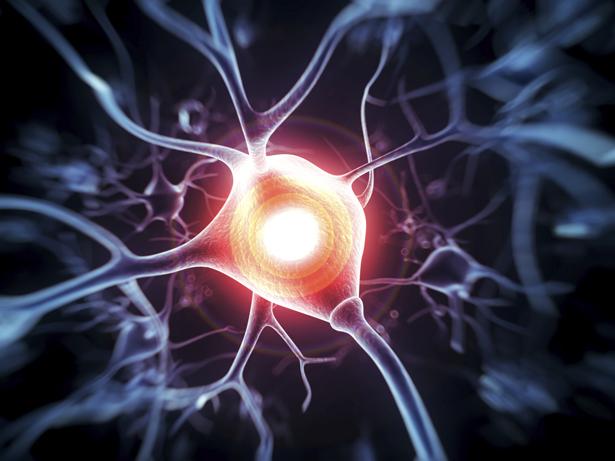 Die fortschreitende Degeneration betrifft vor allem Dopamin-produzierende Neuronen im Mittelhirn.