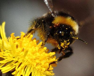 Viele Pflanzen sind auf Insekten als Bestäuber angewiesen