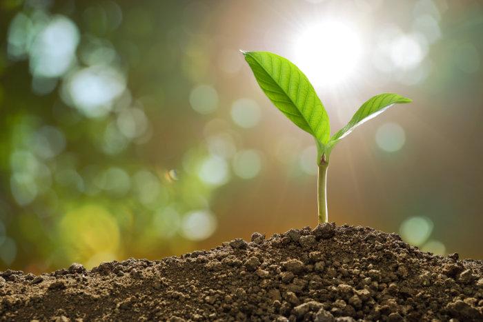 Manche Pflanzen können Metalle aus dem Boden sammeln. © Amenic181/ istock