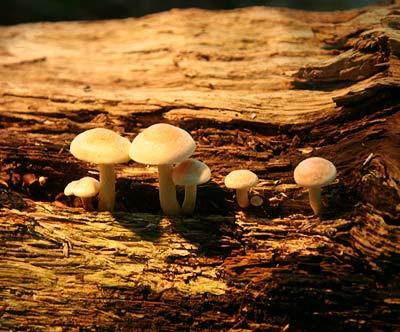 Totes Holz ist die Leibspeise vieler Pilzarten