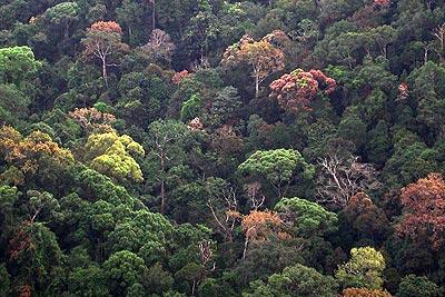Blätterdach im Sinharaja Tropenwald