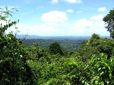 Amazonasregenwald