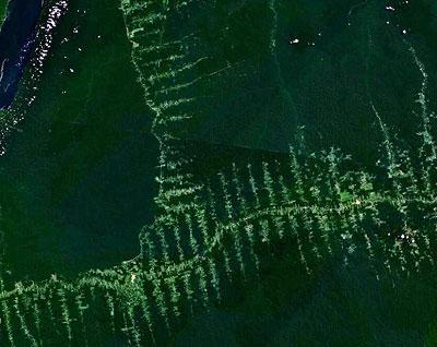 Brasilien will durch weniger Regenwaldzerstörung Emissionen sparen.