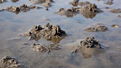 Schlickhäufchen im Wattenmeer