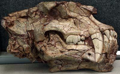 Homotherium crenatidens